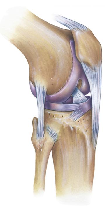 Erkrankungen des Kniegelenks